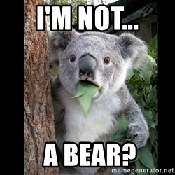 Koala can't believe it - i'm not...  a bear?
