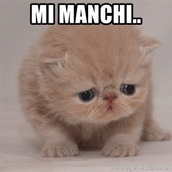 Super Sad Cat - Mi manchi..