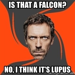 AngryDoctor - is that a falcon? no, i think it's lupus