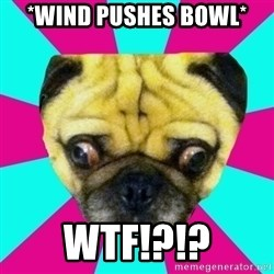 Perplexed Pug - *Wind Pushes Bowl* WTF!?!?