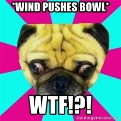 Perplexed Pug - *WIND PUSHES BOWL* WTF!?!