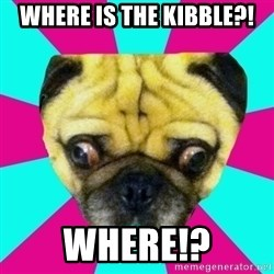 Perplexed Pug - WHERE IS THE KIBBLE?! WHERE!?