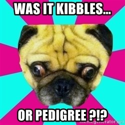 Perplexed Pug - was it kibbles... or pedigree ?!?