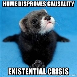Philosophy Major Ferret - hume disproves causality existential crisis