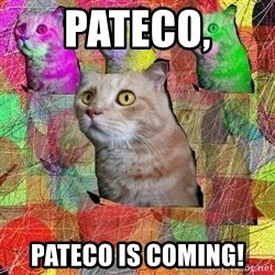 A Cat - pateco, pateco is coming!