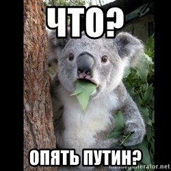 Koala can't believe it - ЧТО? опять путин?