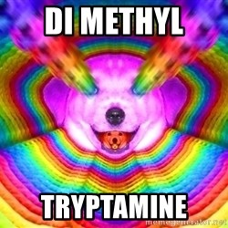 Final Advice Dog - DI METHYL  TRYPTAMINE