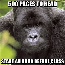 Grad Student Gorilla - 500 pages to read start an hour before class