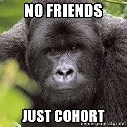 Grad Student Gorilla - no friends just cohort