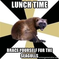 Westview wolverine - lunch time brace yourself for the seagulls