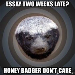 Fearless Honeybadger - Essay two weeks late? Honey Badger don't care