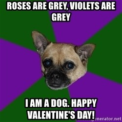WTF dog - Roses are grey, violets are Grey I Am a dog. Happy Valentine'S Day!