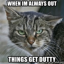 Dirty Cat - when im always out things get dutty
