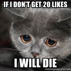 Sadcat - if i don't get 20 likes i will die