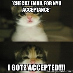 Adorable Kitten - *CHECKZ EMAIL FOR NYU ACCEPTANCE* I GOTZ ACCEPTED!!!