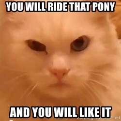 GipCat - you Will ride that pony and you will like it