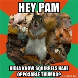 Ill-Informed Squirrel - Hey pam didja know squirrels have opposable thumbs?