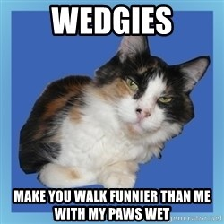 Sees It All Cat - wedgies make you walk funnier than me with my paws wet