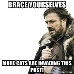 Prepare yourself - Brace yourselves  More cats are invading this post!