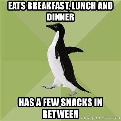 Socially Average Penguin - Eats breakfast, lunch and dinner has a few snacks in between
