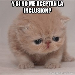 Super Sad Cat - y si no me aceptan la inclusion?