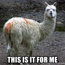Drama Llama - This is it for me