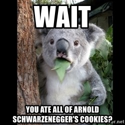 Koala can't believe it - wait you ate all of arnold schwarzenegger's cookies?