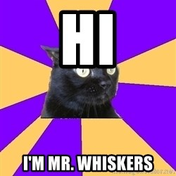 Anxiety Cat - Hi I'm Mr. Whiskers
