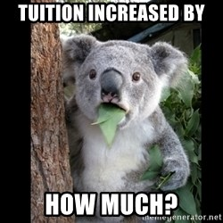 Koala can't believe it - Tuition increased by how much?