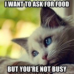 First World Problems Cat - i want to ask for food but you're not busy