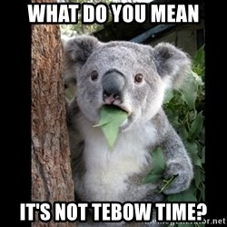 Koala can't believe it - What do you mean it's not tebow time?