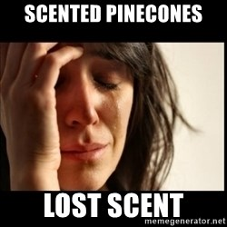 First World Problems - Scented pinecones lost scent