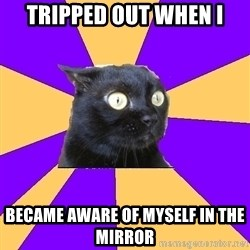 Anxiety Cat - tripped out when i became aware of myself in the mirror