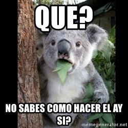 Koala can't believe it - que? no sabes como hacer el ay si?