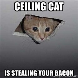 Ceiling cat - Ceiling cat is stealing your bacon