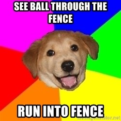 Advice Dog - see ball through the fence run into fence