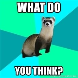 Obvious Question Ferret - What do  you think?