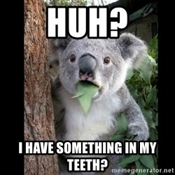 Koala can't believe it - huh? I have something in my teeth?