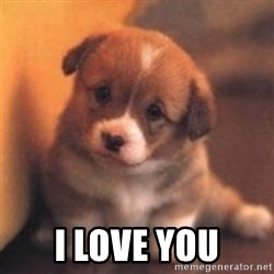 cute puppy -  I love you