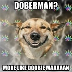 Stoner Dog - Doberman? More like Doobie maaaaan