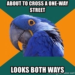 Paranoid Parrot - about to cross a one-way street looks both ways