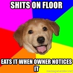 Advice Dog - Shits on floor eats it when owner NOTICES it