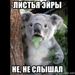 Koala can't believe it - листья эйры не, не слышал