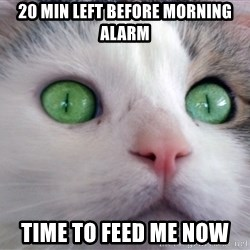 Psychotic Housecat - 20 min left before morning alarm time to feed me now