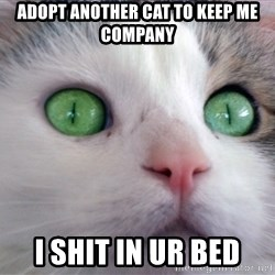 Psychotic Housecat - adopt another cat to keep me company i shit in ur bed