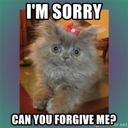 cute cat - I'm Sorry Can you forgive me?