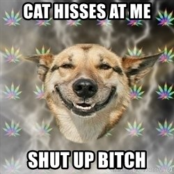 Stoner Dog - cat hisses at me SHUT UP bitch