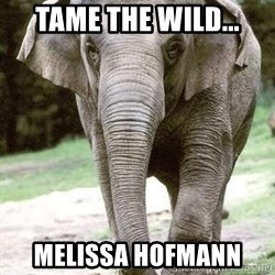 Eating Disordered Elephant  - Tame the wild... MelIssa Hofmann