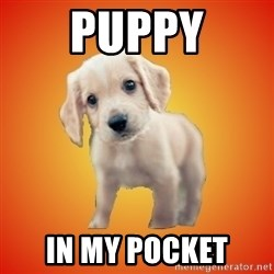 Perrito Chorizo - Puppy In my pocket