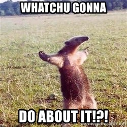 Anteater - Whatchu gonna do about it!?!